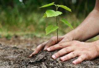 arbre-laval-plantation-arbre-laval-planter-un-arbre