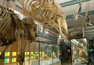musée_histoire_naturelle_11