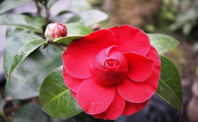 Balade Au C Ur D 39 Un Jardin Japonais A Drache En Nord